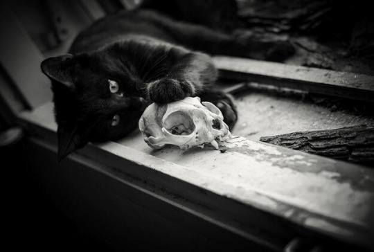 Black Cat and Skull